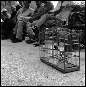 Elizabeth Flinsch - Pet Bird in the Park Silver Gelatin Print, Photography